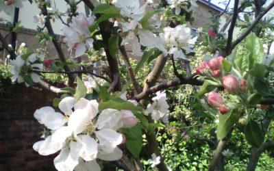 FCH Edible Garden flourishes through lockdown