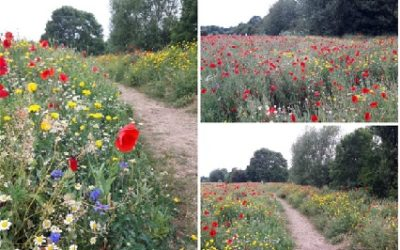 Oxstalls Biodiversity Project wins award