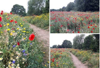 Biodiversity near Oxstalls campus thrives following EU-funded re-wilding project